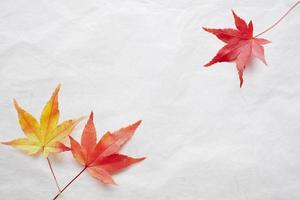 Ahorn und japanisches Papier