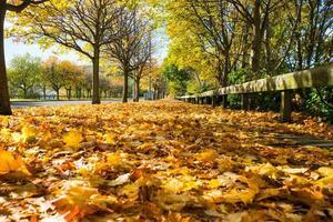 Fußweg mit Herbstlaub bedeckt foto