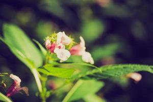 Vintage Foto von schönen wilden rosa Blumen