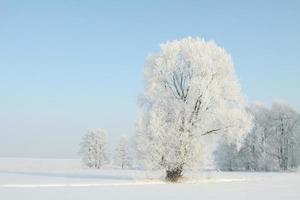 gefrosteter Baum an einem wolkenlosen Morgen