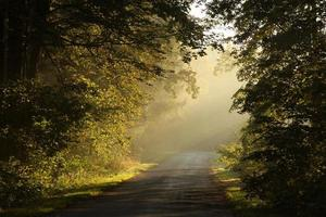 Landstraße im Morgengrauen foto