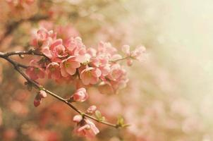 Vintage Blumen foto