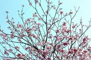 Blume se15 foto