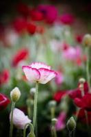 Blumenhintergründe foto