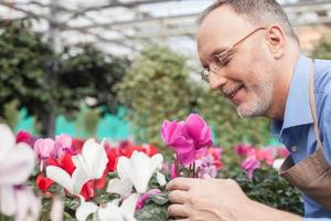 Der fröhliche alte Gartenarbeiter arbeitet mit Freude