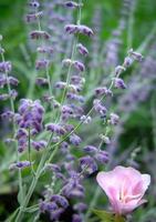 wilde Blumen foto