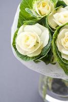 weiße Blumen foto