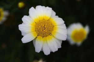 helle Blumen foto