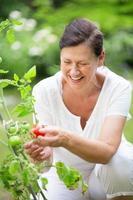Frau, die Tomaten im Garten zupft foto