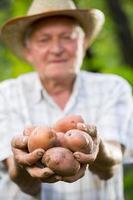 männlicher Gärtner, der Gruppe von Kartoffeln in seinen Händen hält
