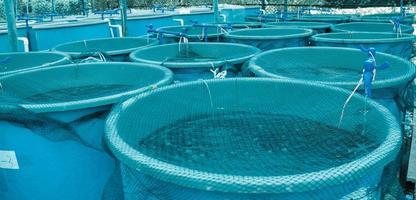 blaue Pools mit Netzen darüber in der landwirtschaftlichen Aquakultur foto