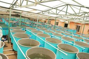Innenansicht einer landwirtschaftlichen Aquakulturfarm foto
