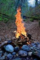 Lagerfeuer im Wald foto