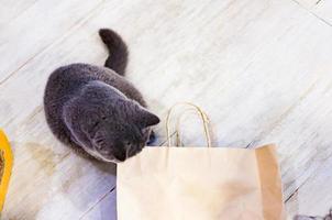 Katze und Papiertüte zum Verstecken foto