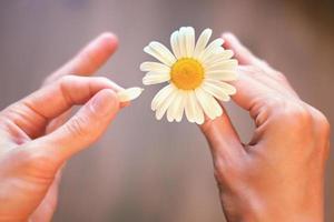 Vermutungen über Kamille für die Liebe
