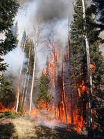Wald in Flammen foto