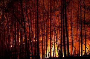 Langsam brennender Waldbrand in der Nacht. foto