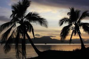 Palmen, Steinhaufen Australien