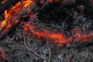 in einem Kiefernwaldbrand brennende Zweige und Bäume Makro foto