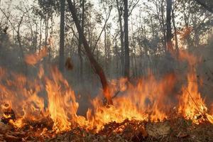 zerstört durch brennenden Tropenwald, Thailand foto