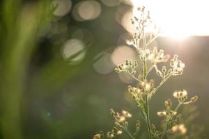 kleine Pflanze mit Bokeh-Hintergrund