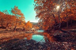 sonniger Tag im Herbst in der Nähe eines kleinen Flusses foto