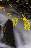 Herbstlaub und fließender Strom foto
