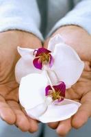 Frau hält Orchideen foto
