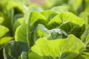 grüner Vagetisch foto