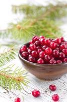 frische Cranberry in einer Schüssel foto
