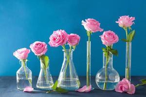 rosa Rosenblüten in chemischen Flaschen über blau