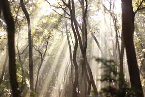 durchnässt im Wald Asahi foto