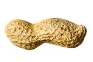 Erdnuss isoliert Nahaufnahme