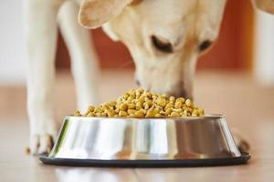hungriger Hund foto