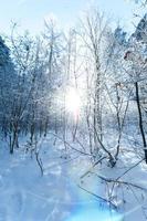 schöne Winterlandschaft mit schneebedeckten Bäumen foto