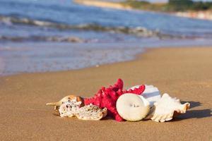 Muscheln mit Seesternen im Sand