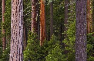 Wald foto