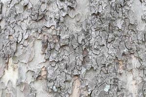 Baumrindenbeschaffenheit rau. foto
