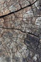 Holz verrotten