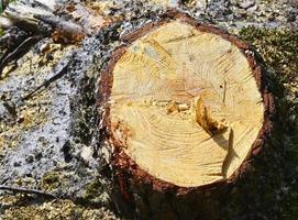 Baum abgesägt