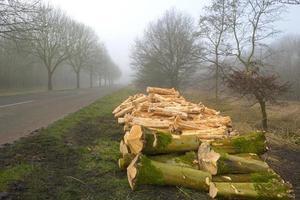 Holzstapel in der Nähe eines Waldes im Winter foto