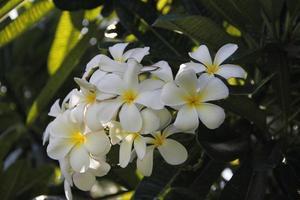 Blumen, große Insel, Hawaii foto