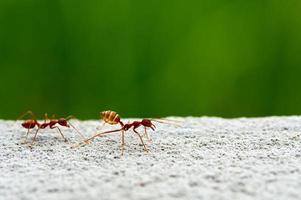 Insektenleben auf der Erde foto