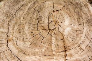 Holz Textur Hintergrund / Holz Textur foto