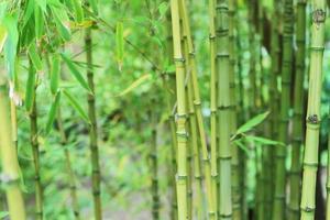 asiatischer Gartenhintergrund