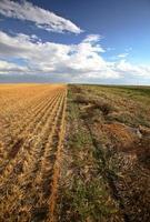 schöne Wolken über einem Saskatchewan Stoppelfeld