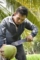 Malaysia, arbeitet an einem Reisfeld. foto