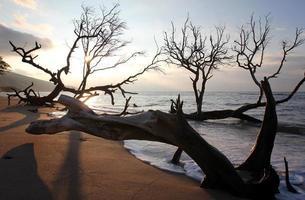 Maui Küste foto