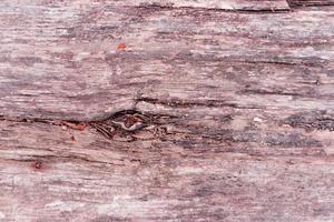 Textur. Holz foto