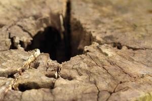 Löcher im Holzhintergrund am Wald foto
